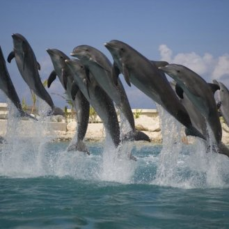 Dolphins 5